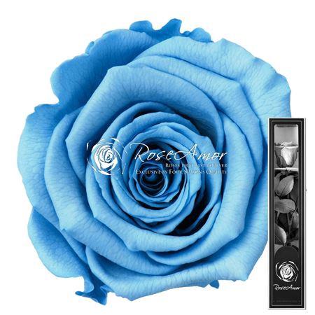 <h4>30cm Stem Blu01</h4>