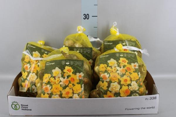 <h4>Narcissus   ...flowerbulbs</h4>