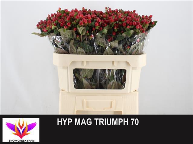 <h4>HYP MAG TRIUMPH</h4>