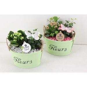 arr. PL - PLywood groen - roze/wit