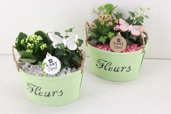 <h4>arr. PL - PLywood groen - roze/wit</h4>