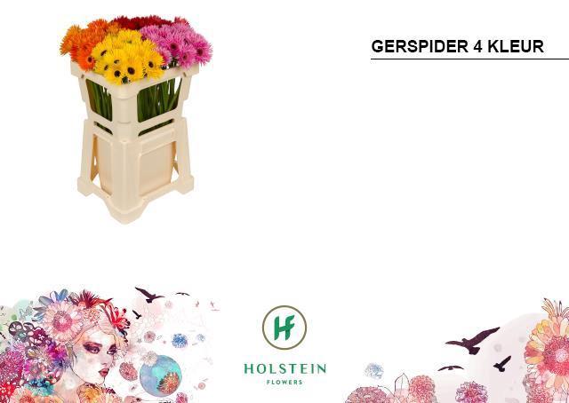 <h4>GE MS GERSP GEM</h4>