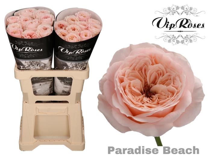 R KL PARADISE BEACH x 20