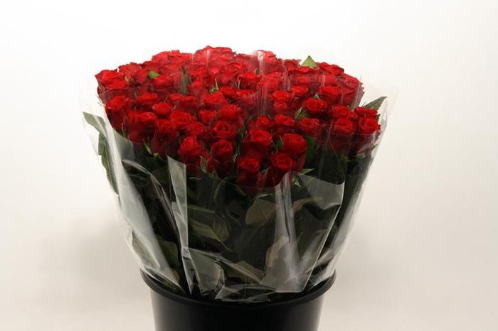 <h4>Mono Roos Red Naomi X10</h4>