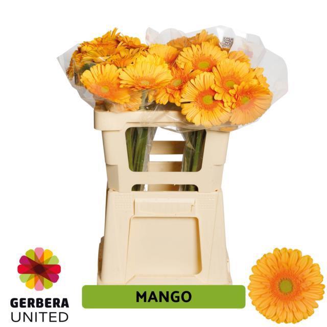 <h4>GE GR Mango water</h4>