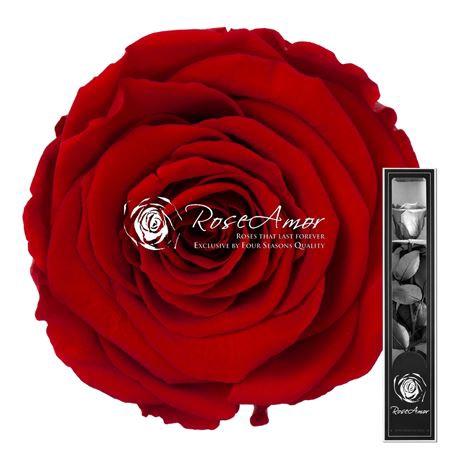 <h4>30cm Stem Red02</h4>