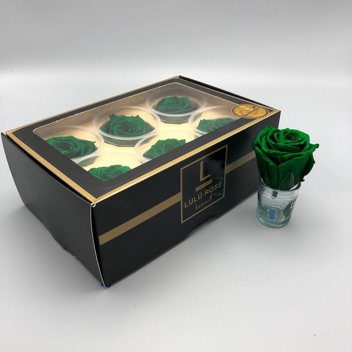 <h4>R PR Lulu (Large) Green</h4>