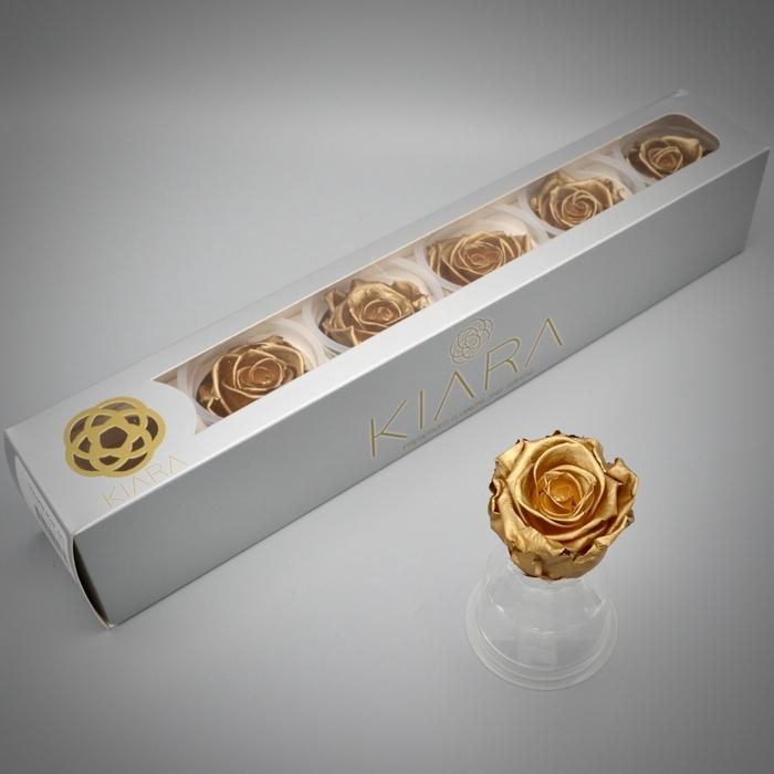 <h4>R PR Splendid Gold</h4>
