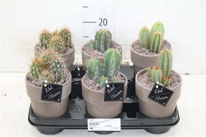 <h4>Cactus Gemengd In Bruine Pot</h4>