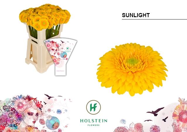 <h4>GE BV hoes Gerponi Sunlight</h4>