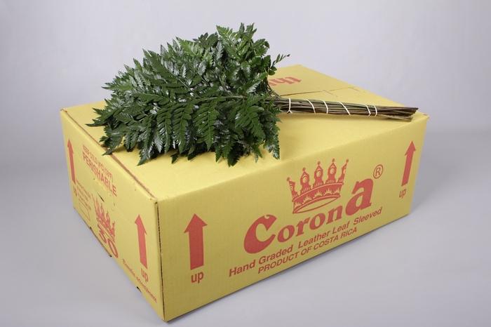 <h4>Ledervaren Medium Corona</h4>