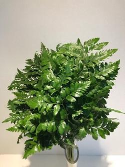 <h4>Greens - Ngogolo Fern 50/60 (p/bnch)</h4>