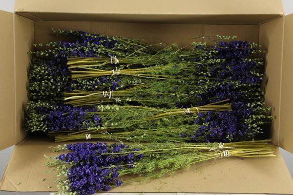 <h4>Df Delphinium Blue Bs 40gr</h4>