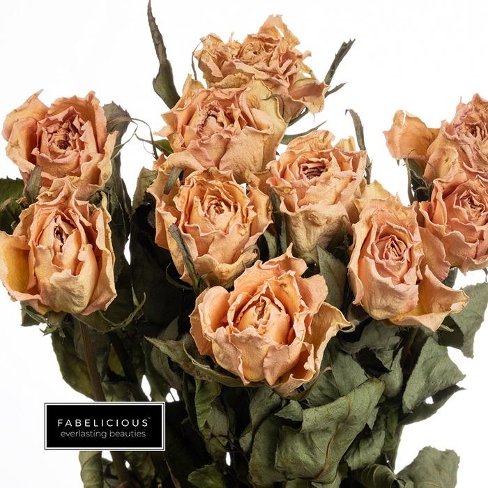 <h4>Dried Rosa grootbloemig Angela</h4>