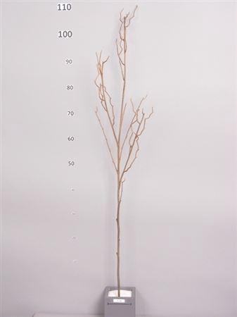<h4>Corylus branch Corynn h120 brown</h4>
