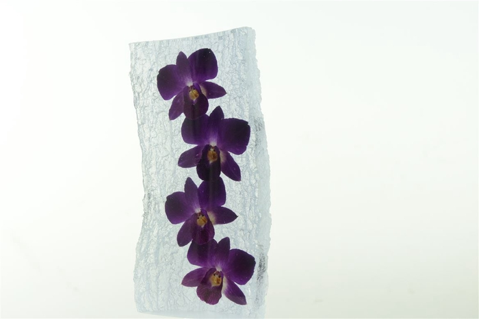 <h4>Kristal 4 Dendrobium</h4>