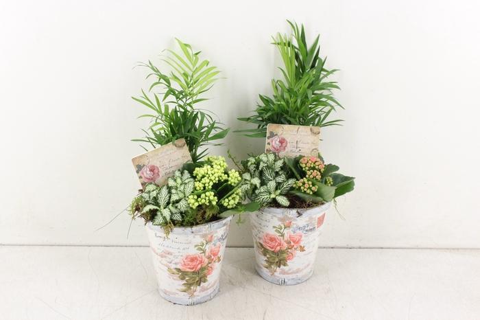<h4>arr. TD454 - Pot roos - roze/wit</h4>