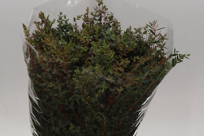 <h4>Eucalyptus Parvi 300gr. (P. Bos)</h4>
