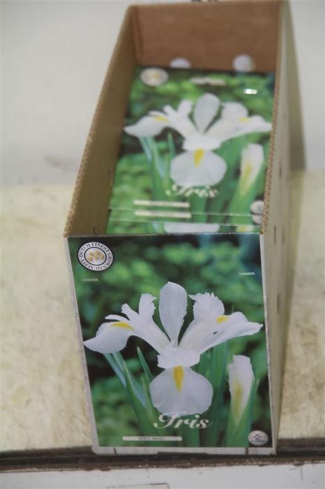 <h4>Bol Iris White Magic 10 Zakjes X15</h4>