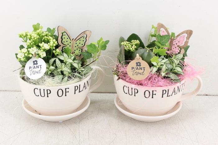 <h4>arr. PL - Cup of plants - roze/wit</h4>
