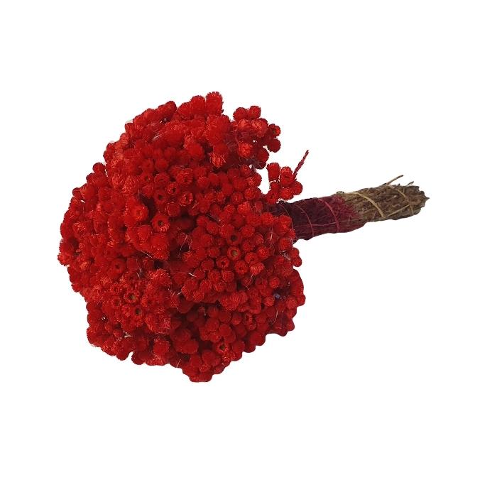 <h4>DRIED FLOWERS - IMMORTELLE CERISE</h4>