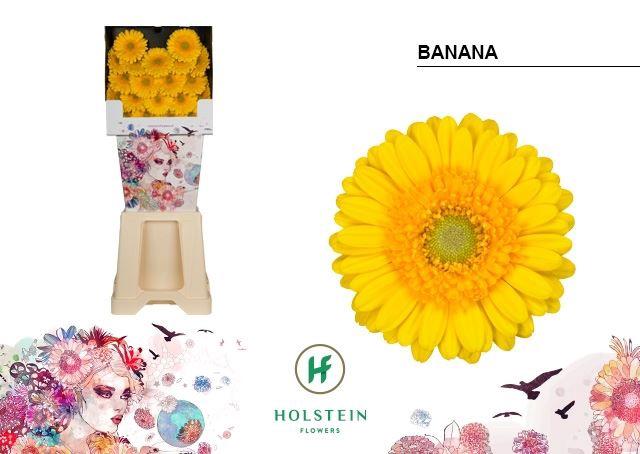 <h4>Germini Banana</h4>