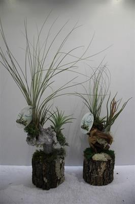 <h4>Tillandsia Pot Hoog</h4>
