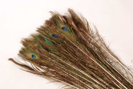 <h4>FEATHER PEACOCK NATUREL PST L100-11</h4>