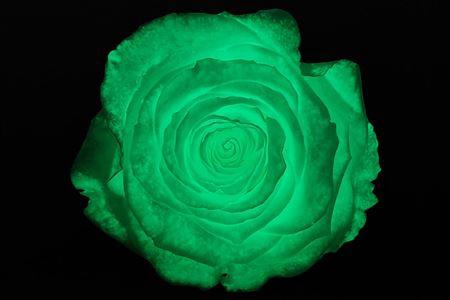 <h4>Pr 1.6 Glow In Dark Gr Xl</h4>