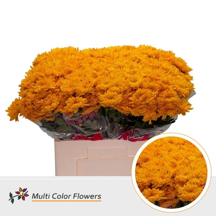 <h4>Chrys.tros Euro geel gekleurd Oranje</h4>