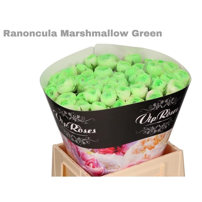 <h4>RAN OV MARSHMALLOW GREEN</h4>