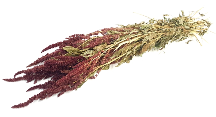 <h4>Amaranthus per bunch Red</h4>