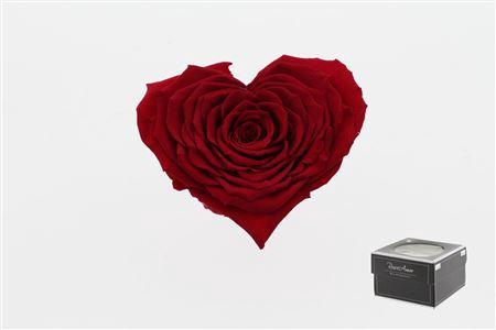 <h4>Pr 5.2 Heart Red-02 Xxl</h4>