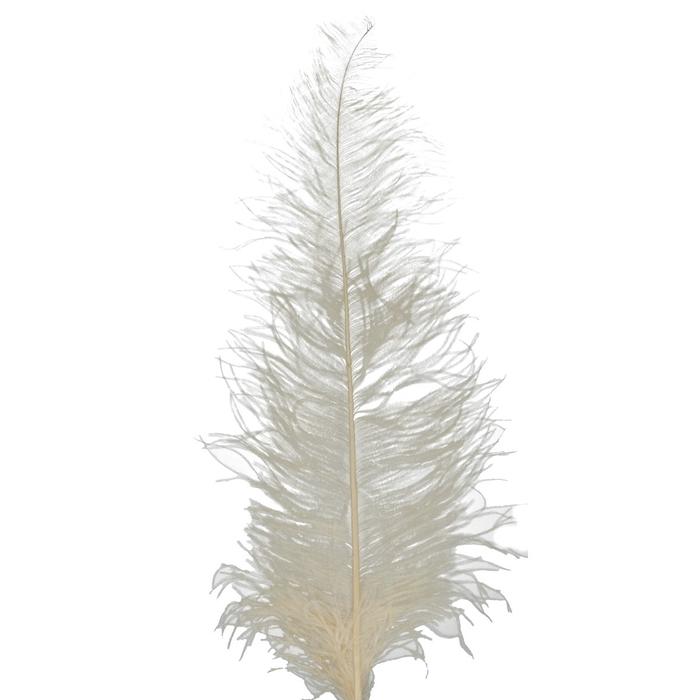 <h4>Veren Struisvogel d10*60cm x5</h4>