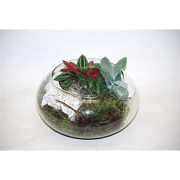 <h4>811 Floatschaal mini groenmix</h4>