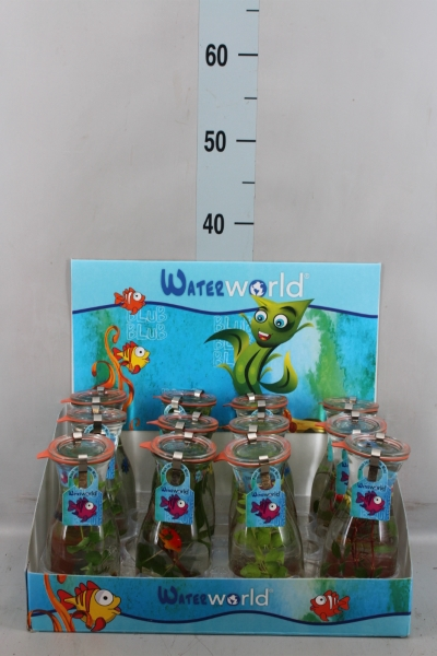 <h4>Aquariumplanten   ...mix</h4>