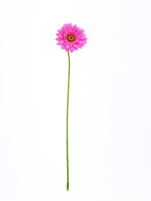 <h4>Af Gerbera 62cm Pink</h4>