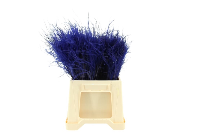 <h4>Stypha Penata Blue</h4>