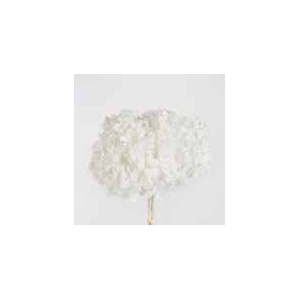Hydrangea white stabi