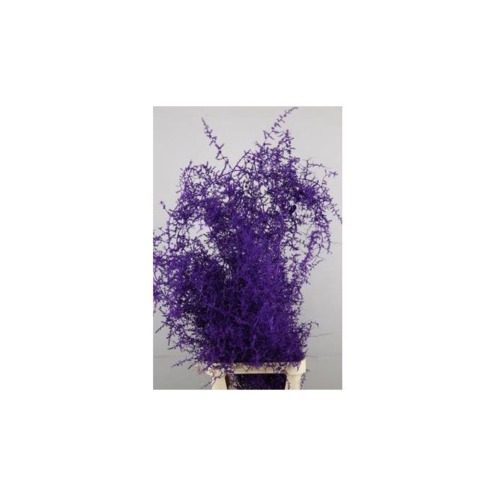 <h4>Asparagus Salvatico Aubergine+</h4>