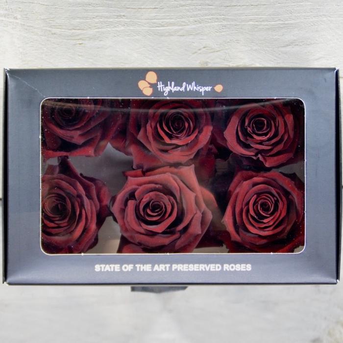 <h4>PRESERVED ROSES M Burgundy</h4>