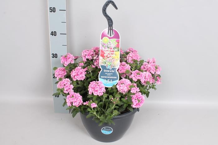 <h4>Hangpotten 27 waterreservoir Verbena Pink Romance</h4>