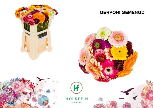 <h4>GE BV water Gerponi mix</h4>