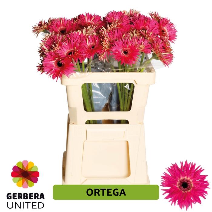 <h4>GE GR Ortega water</h4>