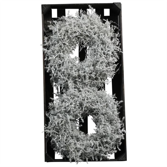 <h4>WR ASPARAGUS D25CM WHITE WAX</h4>