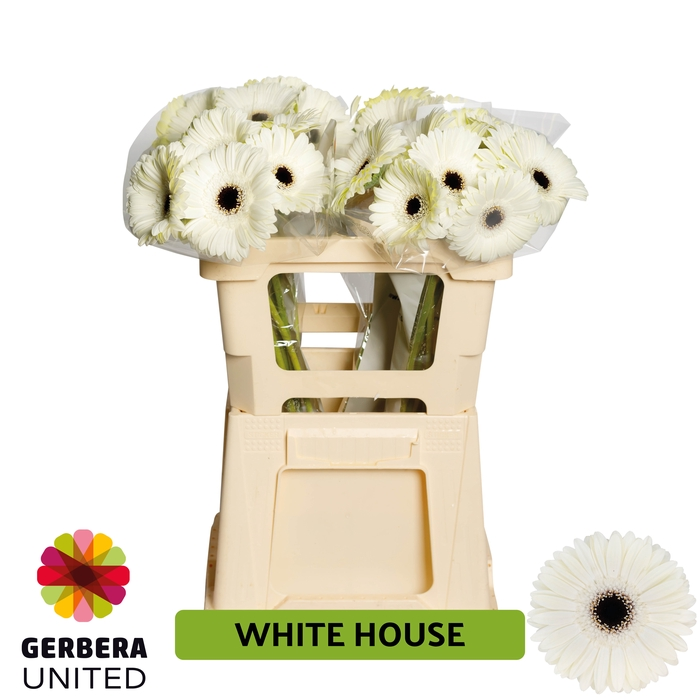 <h4>GE GR White House water</h4>