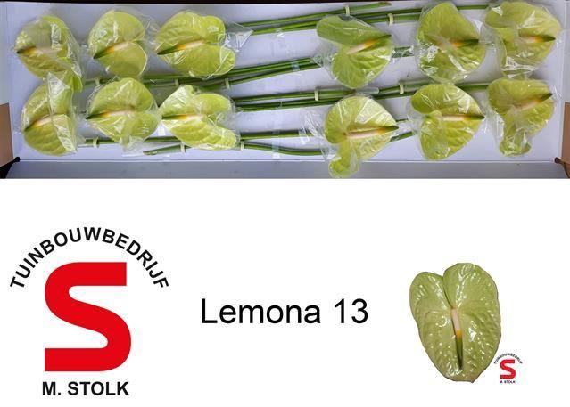 <h4>Anth Lemona</h4>