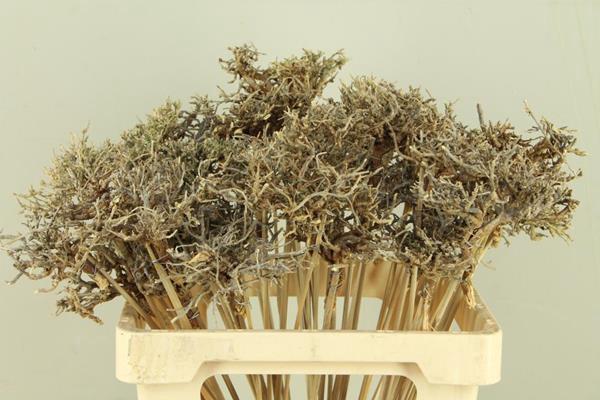 <h4>Stick Dry Tree</h4>