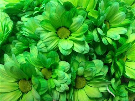 <h4>Chr T Bacardi Green</h4>