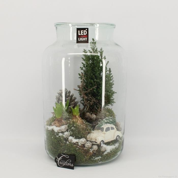 <h4>Arr.  Hyacinthus H%</h4>